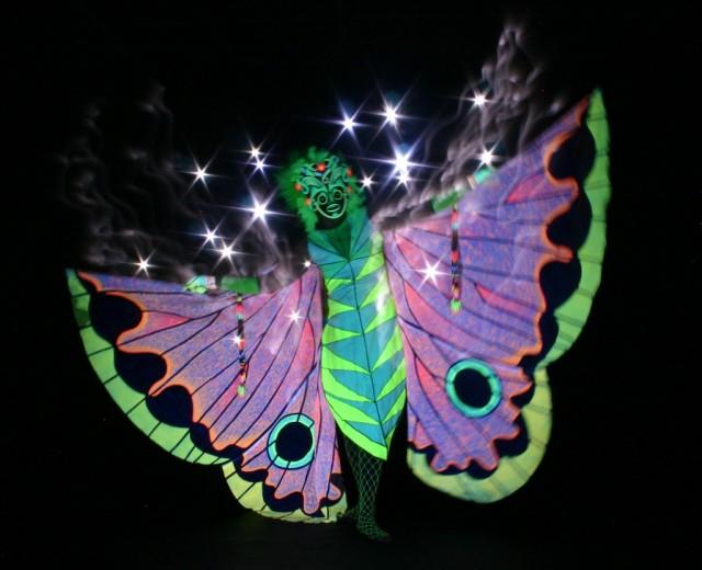 butterfly-1024x832