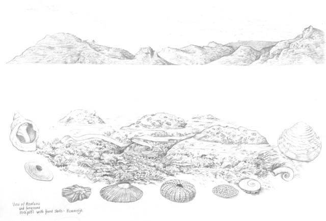 shells-copy
